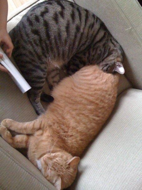 cat_ass