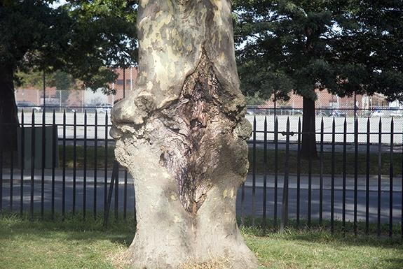 Vag_Tree